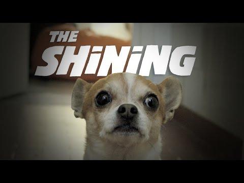 CHIHUAHUA SHINING TWINS REACTION | Nic and Pancho