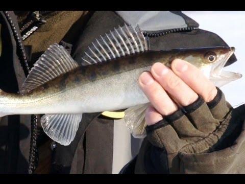 Камеры для зимней рыбалки купить в интернет магазине
