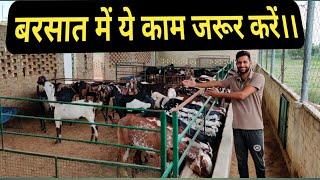 How to Protect Animal's in Rainy Season । Goat Treatment । बरसात में बकरियों की देखभाल कैसे करें ।