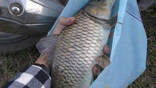 Câu cá hồ thiên nhiên và kết quả được một con cá gáy(cá chép) Khủng