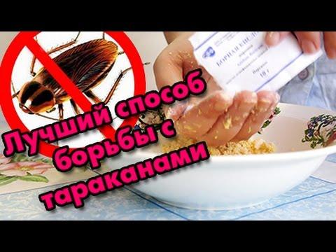 Как избавиться от домашних тараканов / Борная кислота - эффективный способ