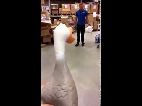 Guy kicks defenseless duck really high :(
