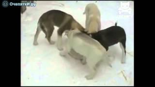 Круговорот собак в природе