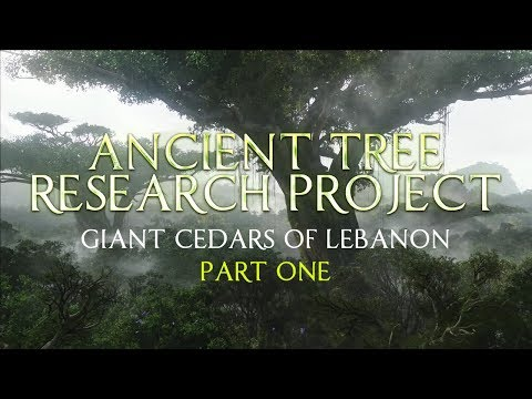 Ancient Tree Research Project | Giant Cedars of Lebanon - Part 1