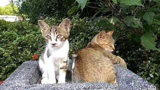 最近一人でいることが多く子猫と一緒にいる所をあまり見なくなっていた...