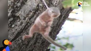 「気がついてよかった!危なかったね」木の枝に引っかかってしまった赤ちゃんリスの救出作戦