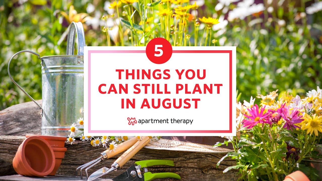 5 Things You Can Still Plant In August | Apartment Therapy