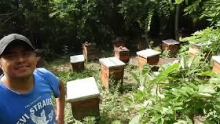Apiarios De Abejas En Oaxaca Mexico: Productor De Miel