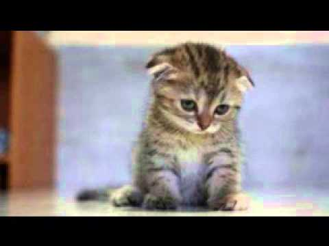 One is the Loneliest Number (as told by cats)
