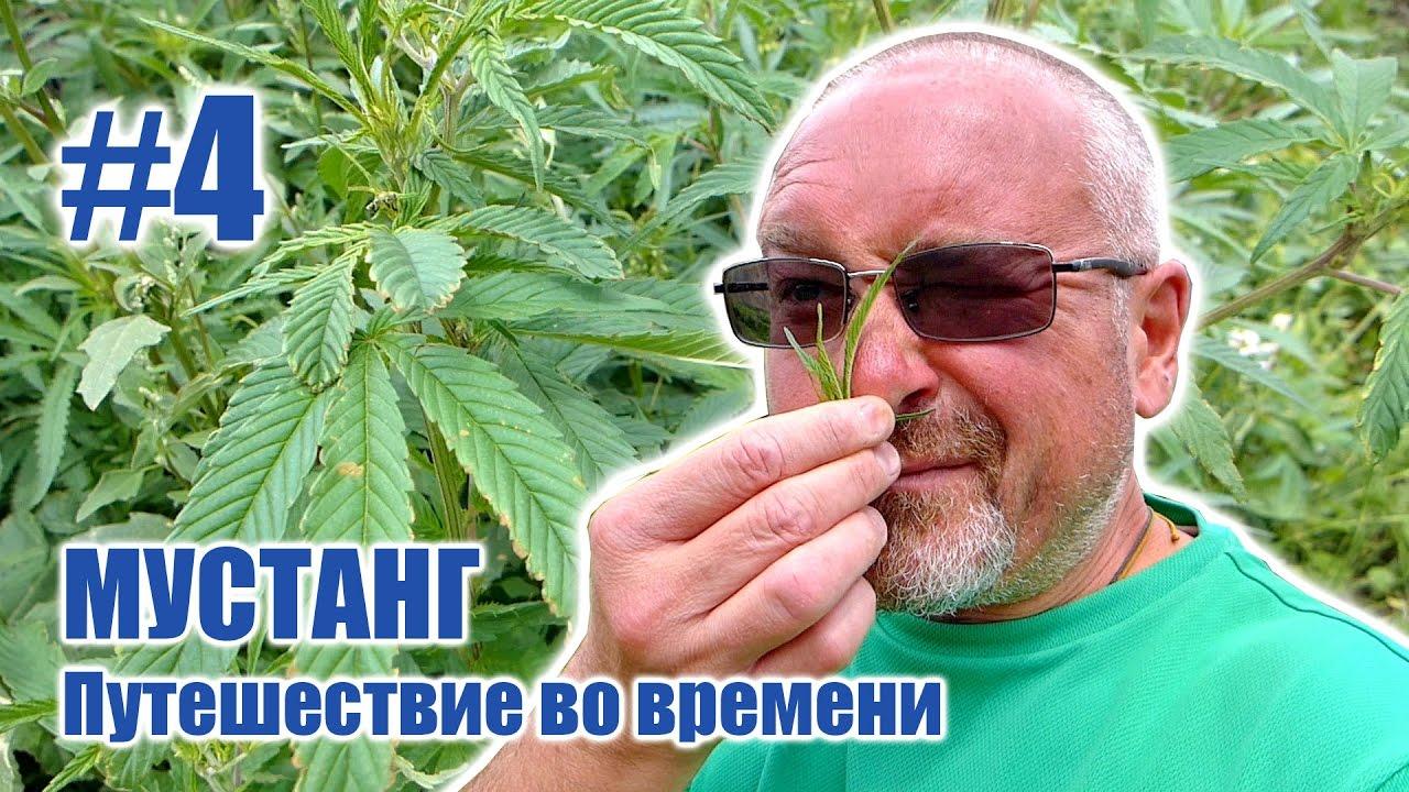 Буддисты и марихуана потливость после марихуаны