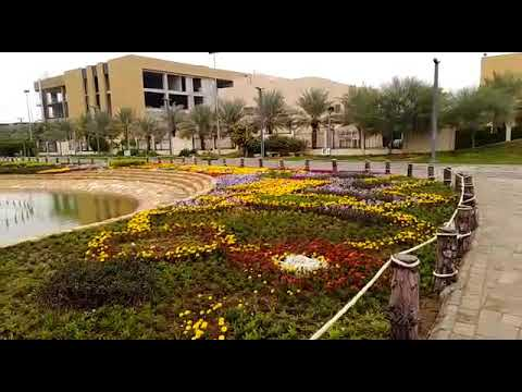 حديقة الزهور بالعاصمه الرياض حي المحمديه يوم الإثنين ١٦ ١٢ ٢٠١٩م Youtube