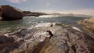 Trailer Südafrika - Kapstadt und die Garden Route