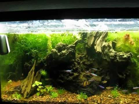 Wild Nature Aquarium Driftwood Aquascape - YouTube