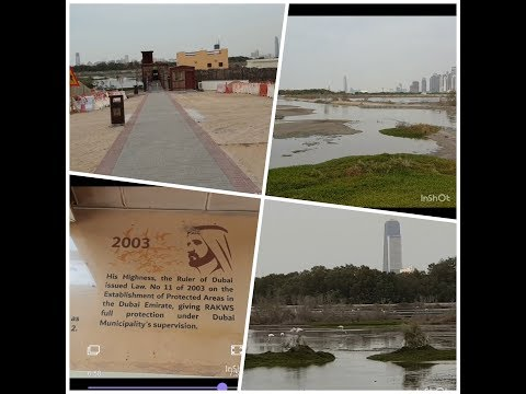 Ras al khor wildlife sanctuary 2020#Dancing birds in Dubai # free of cost #