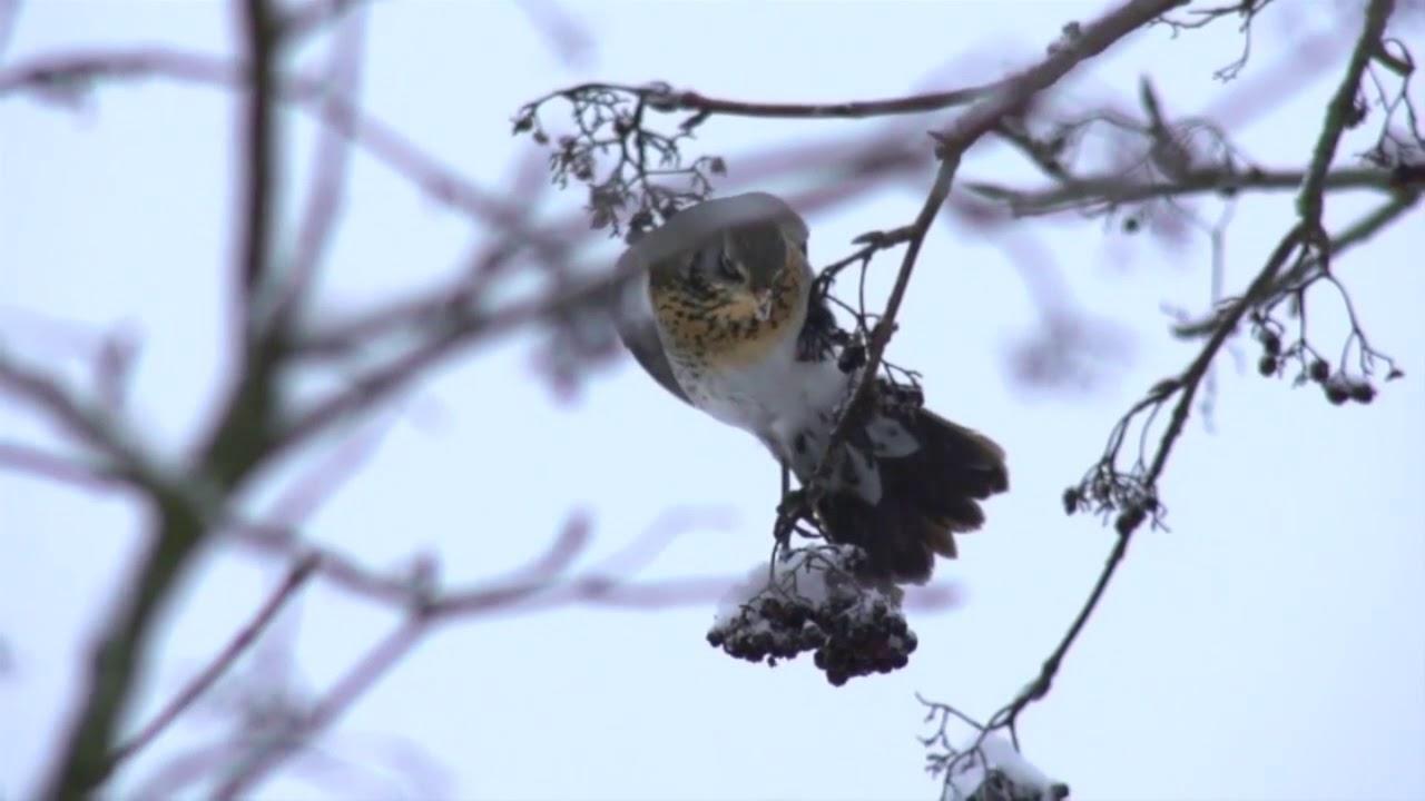 Птицы запели наркологию уфа