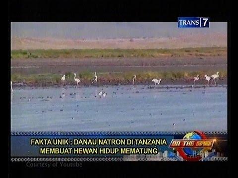 Fakta Unik Danau Natron di Tanzania - On the spot Trans7 [16-10-2013]