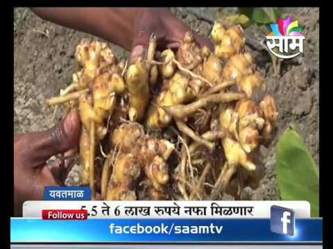 #Agrowon: Success Story Of Pradeep Raut Of Ginger Farming In Yavatmal
