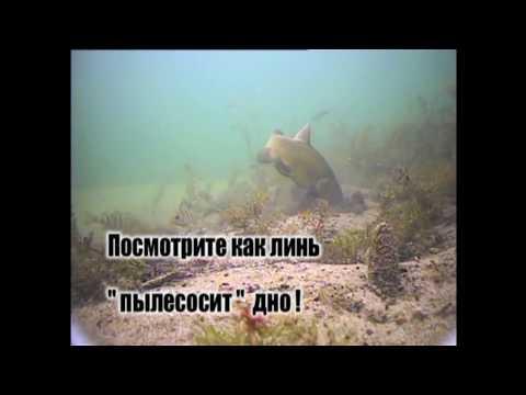Видео Ловля карпа -