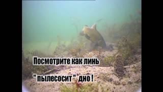Удивительные подводные съемки ловли линя!