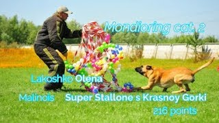 """MR2 """"Mafia"""". Lakoshko Olena Mondioring cat. 2 Malinois Super Stallone s Krasnoy Gorki 216 points"""