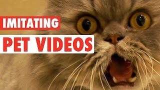 Funny Pet Face Impressions || Funny Pet Face Challenge