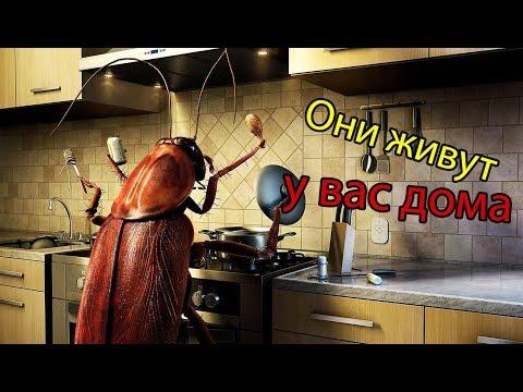 5 насекомых постоянно живущих в вашей квартире | 5 жутких домашних насекомых