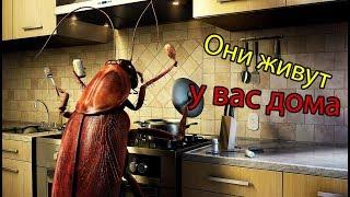 видео Домашние насекомые многоножки