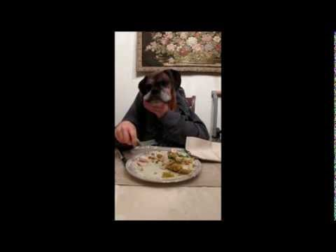 Boxer Dog Eating Thanksgiving Dinner with Human Hands