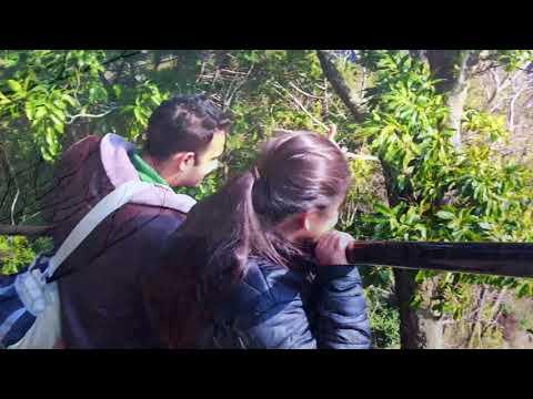Destination Mount Guzaisho | hiking| vlog| japan tourist place| travel to japan