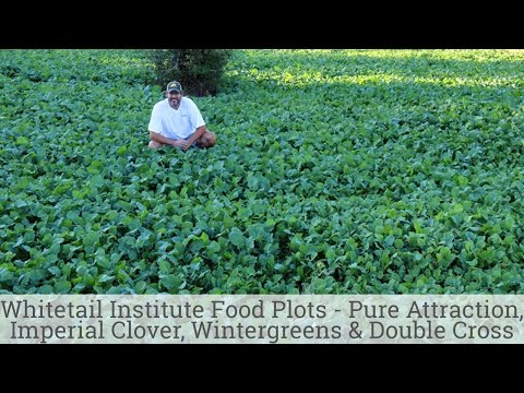Whitetail Institute Food Plots - Pure Attraction, Imperial Clover, Wintergreens and Double Cross