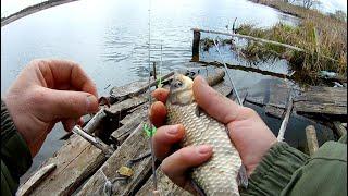 Рыбалка на карася в плохую погоду Рыбалка на фидер Рыбалка на озере