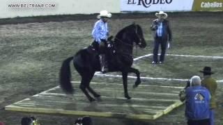 Caballos Bailadores Categoría A - 11 - Feria G Culiacan