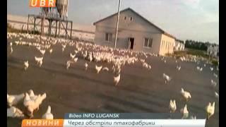 В Луганской области произошло нашествие беглых кур