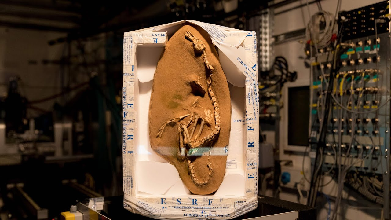very-weird-new-species-of-amphibious-dinosaur-discovered