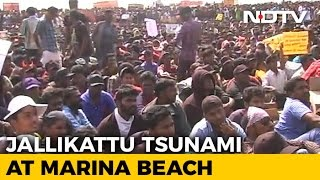 Chennai's Arab Spring Moment? Not Just About Jallikattu At Marina Beach