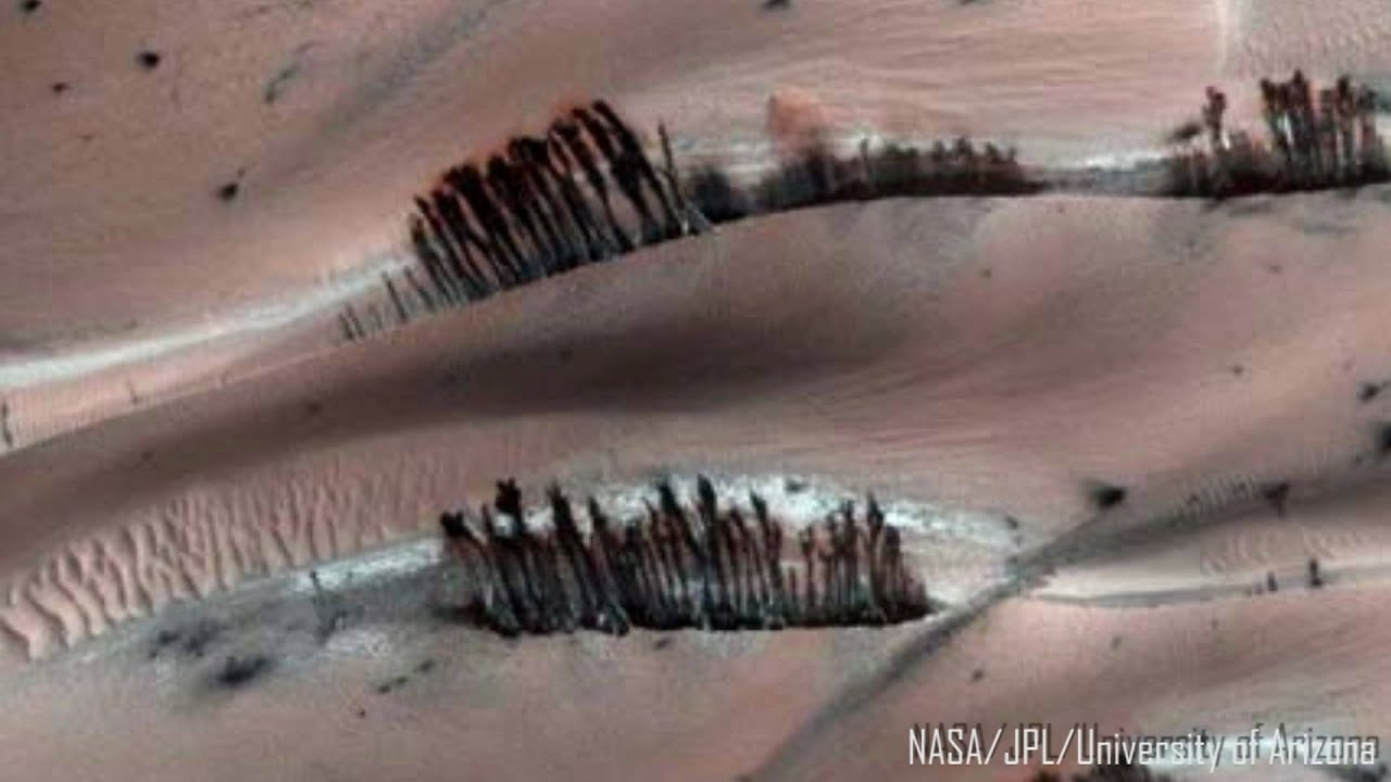 Are there trees on Mars? - YouTube