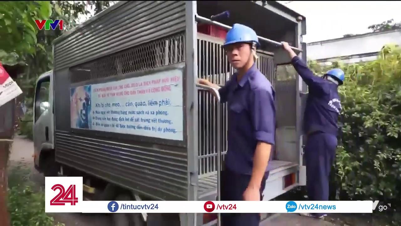 TPHCM: Siết chặt tình trạng thả rông chó trên địa bàn Q1- Tin Tức VTV24