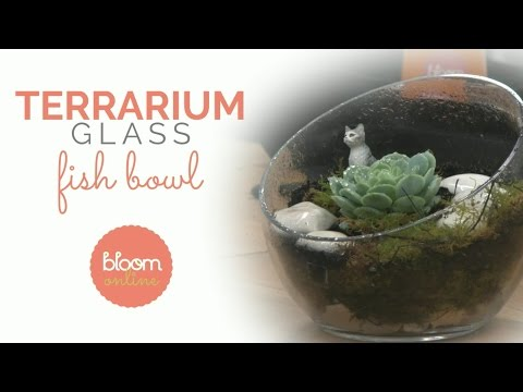Make A Professional Glass Fish Bowl Terrarium