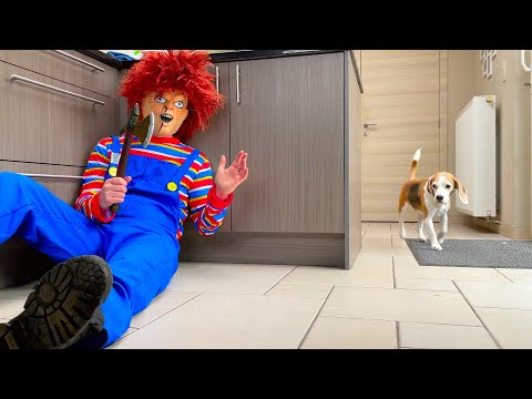 Funny Dogs vs Chucky from Child's Play PRANK!