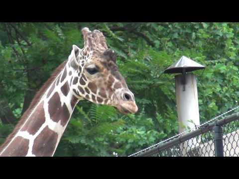 The Maryland Zoo Baltimore