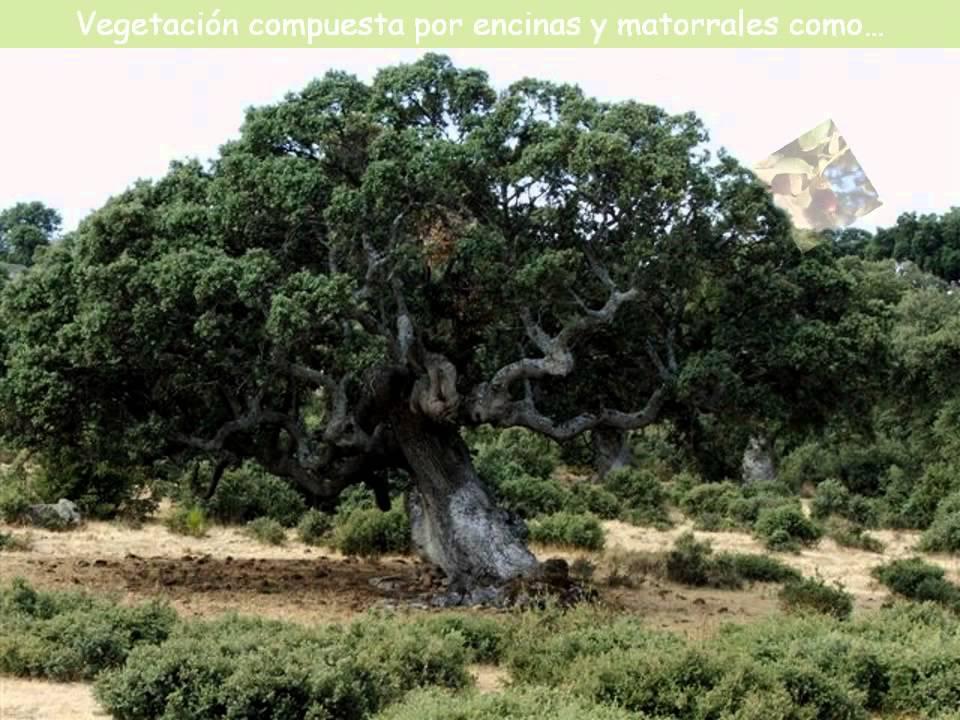 Los paisajes naturales de espa a youtube for Arboles de hoja perenne en madrid