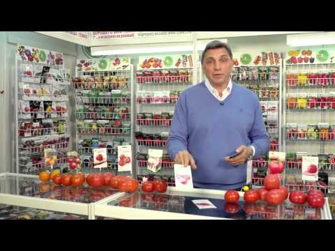 Детерминантные томаты для открытого грунта. Советы и секреты. Выпуск 17