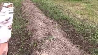 Посадка картофеля под сено на целине.-2 (продолжение)(Регион - Кострома. Северо-запад России., 2016-06-14T17:46:10.000Z)