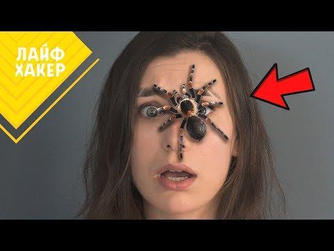 Вопрос: Как бороться с пауками?