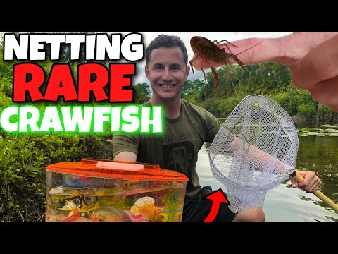 NETTING RARE EXOTIC Fish In TINY CREEK! (FT. PAUL CUFFARO)
