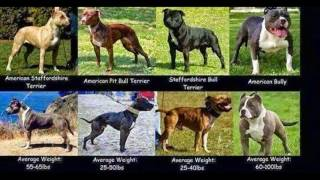 LEARN THE FUCKING DIFFERENCE. EVERYTHING ISN'T A FUCKING PIT BULLS