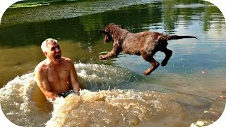 Смешные Приколы с Животными 2015! Супер Подборка / Funny Animals 2015