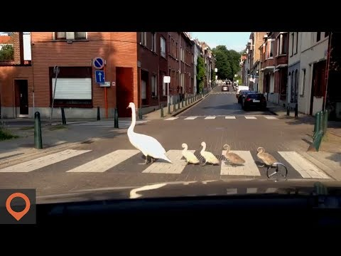 5 Things NOT TO Do in Belgium