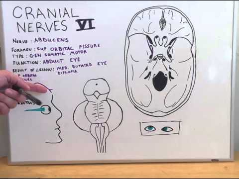 Cranial Nerve VI - Anatomy Lecture for Medical Students - USMLE Step ...