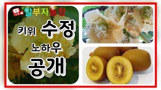 키위재배방법 참다래 인공수정 노하우 공개